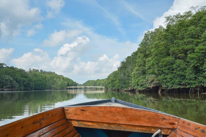 Dżungli rzeka, Brunei obrazy royalty free