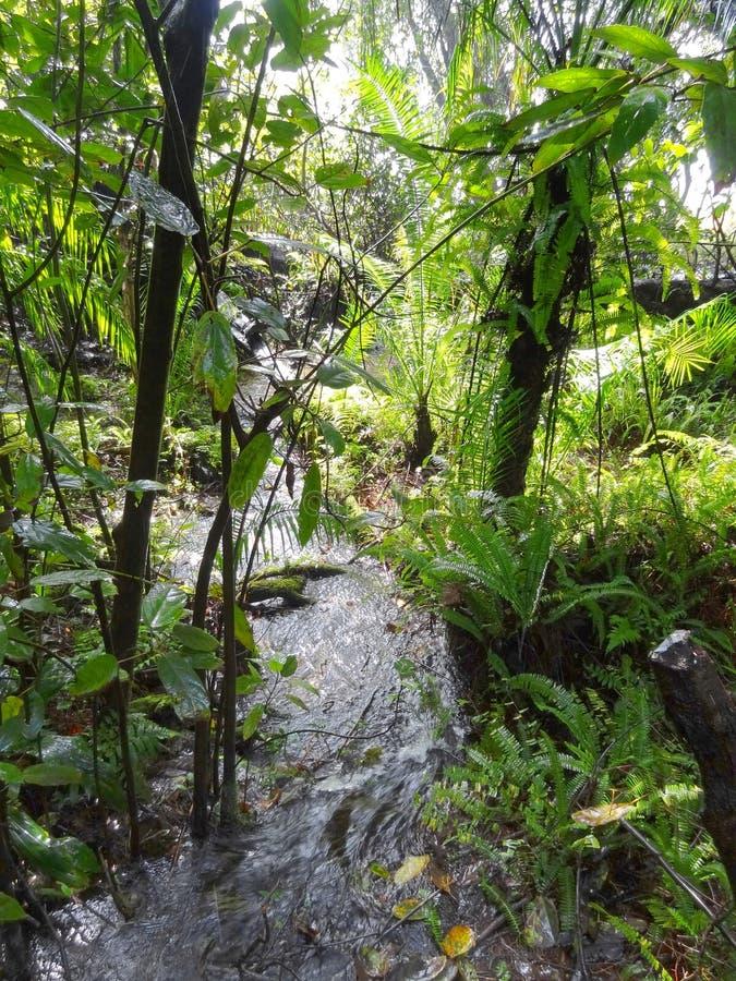 Dżungli sceneria obraz royalty free