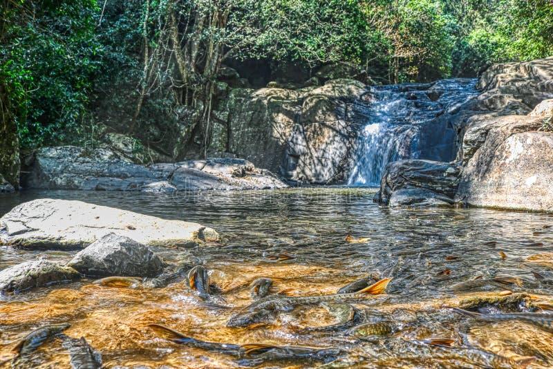 Dżungli siklawa - Pala U siklawa Hua Hin Tajlandia fotografia stock