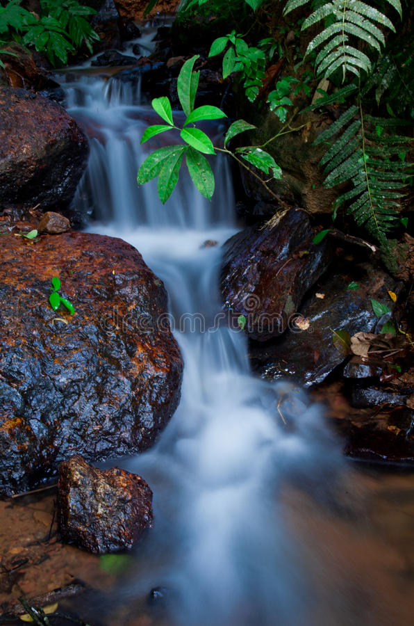 Dżungli zatoczka zdjęcia stock
