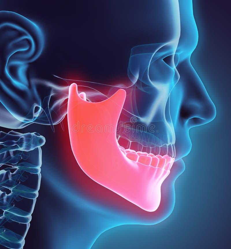 3D下颚骨的例证,医疗概念 库存例证