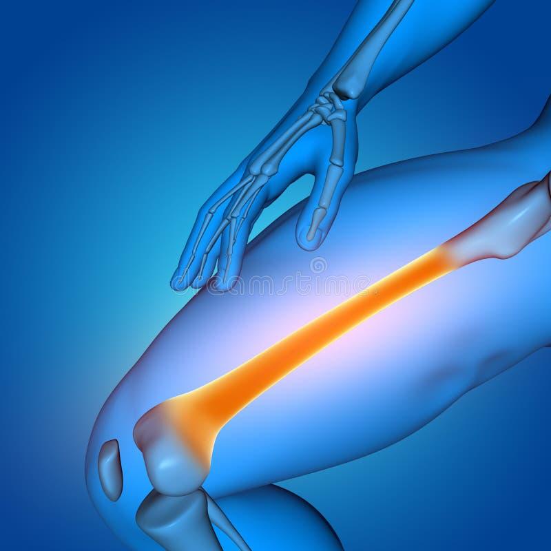 3D与关闭的医疗男性图大腿骨头 库存例证