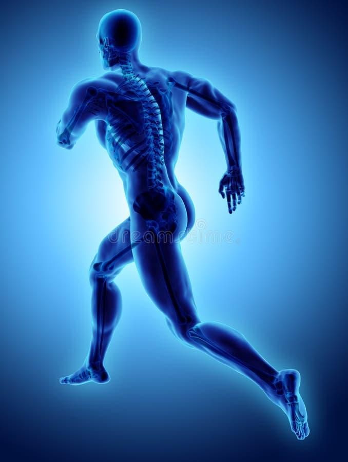 3d与X-射线最基本的联接, med的例证男性赛跑姿势 向量例证