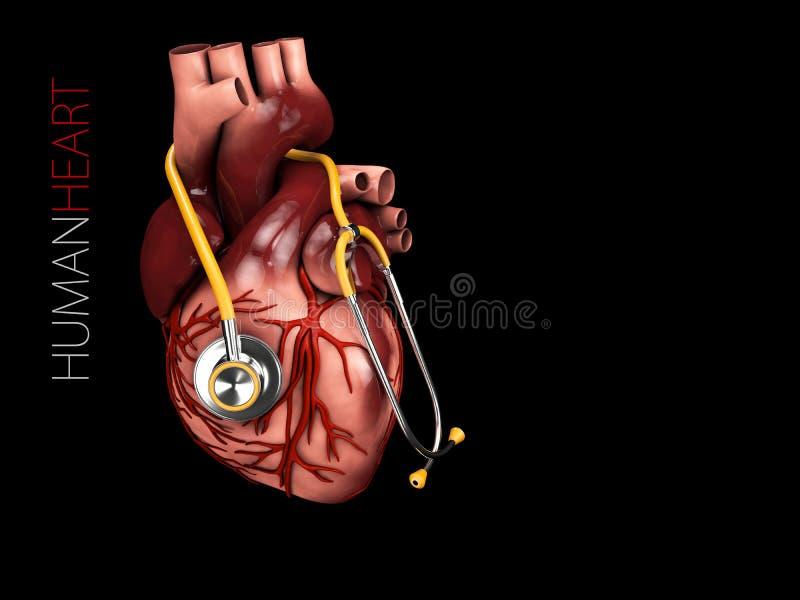 3d人的心脏解剖学的例证与听诊器的 器官标志 查出在黑色背景 库存例证