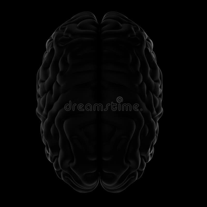 3D人脑的例证 黑色背景 库存例证