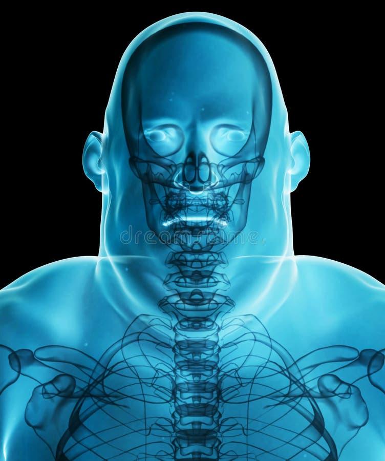 3d例证男性肥胖X-射线阴影,医疗保健医疗conce 库存例证