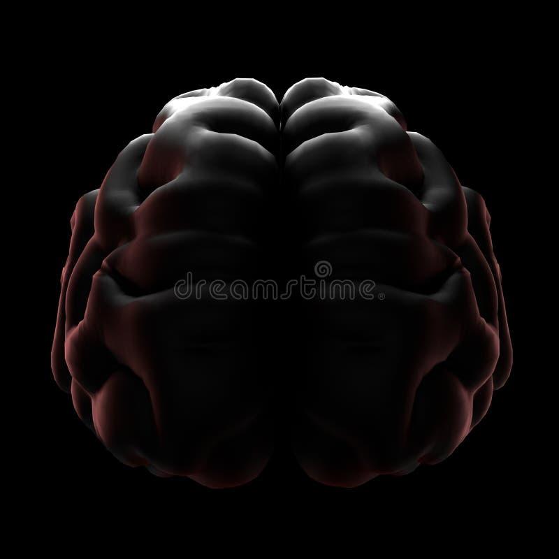 3D例证o f人脑透视图 库存例证