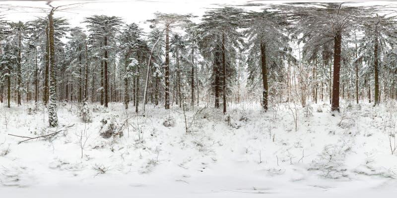 3D冬天与360度视角的森林和杉木球状全景有雪的 为在vr的虚拟现实准备 充分 免版税库存图片
