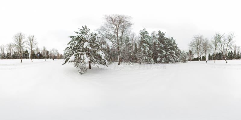 3D冬天与360度视角的森林和杉木球状全景有雪的 为在vr的虚拟现实准备 充分 免版税库存照片