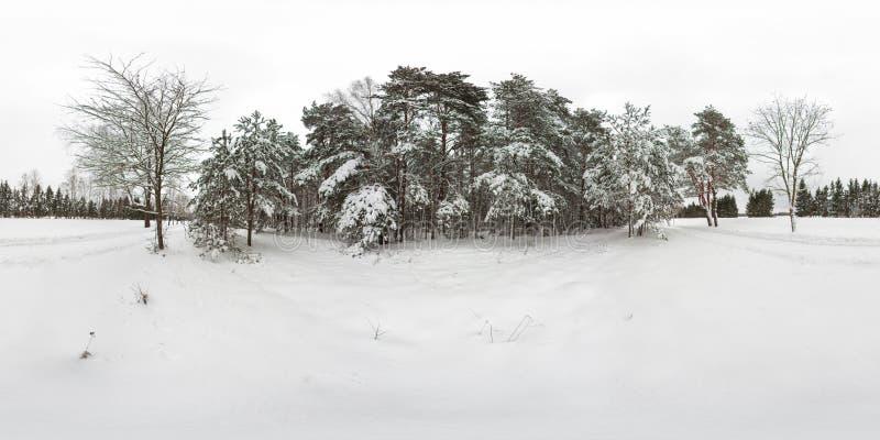 3D冬天与360度视角的森林和杉木球状全景有雪的 为在vr的虚拟现实准备 充分 库存照片