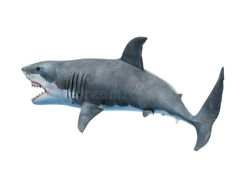 一只大白鲨鱼 向量例证