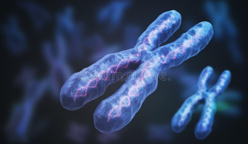 3D回报了染色体的例证 遗传学概念 向量例证