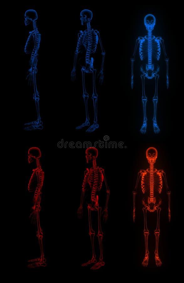 3D回报了骨骼 皇族释放例证