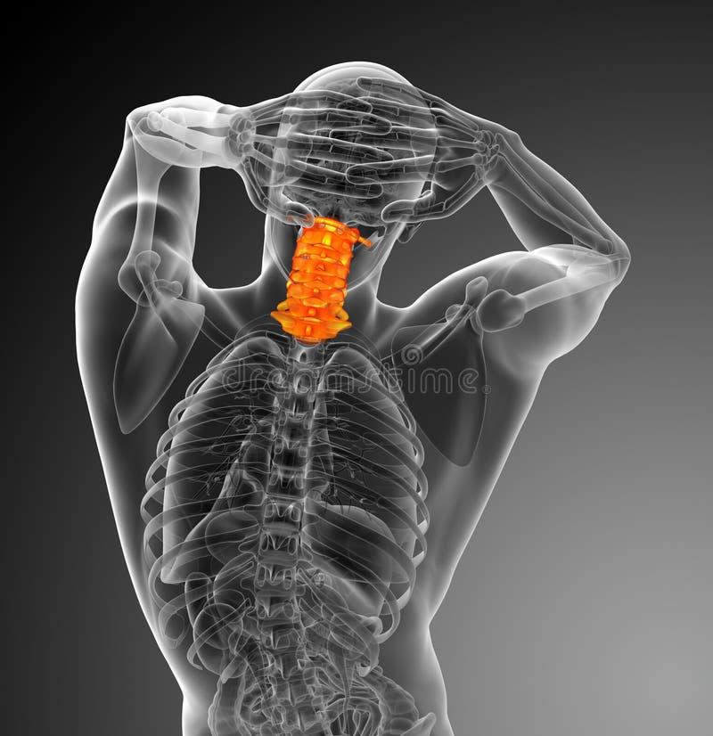 3d回报子宫颈脊椎的医疗例证 向量例证