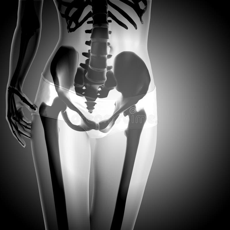 3D回报有骨骼的一个妇女形象 库存例证