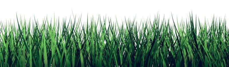3D在白色背景的草 库存图片