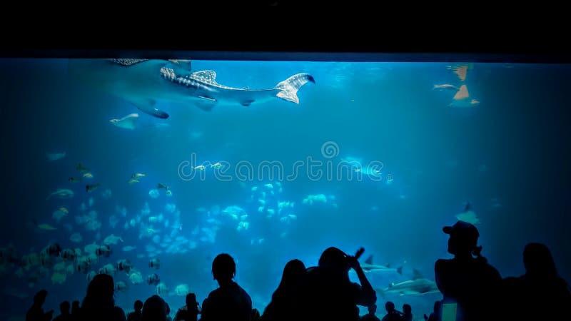 3d在路径的剪报使影子鲨鱼鲸鱼空白 免版税库存照片