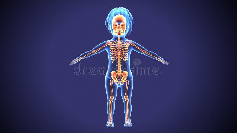 3d婴孩骨骼解剖学的例证 向量例证