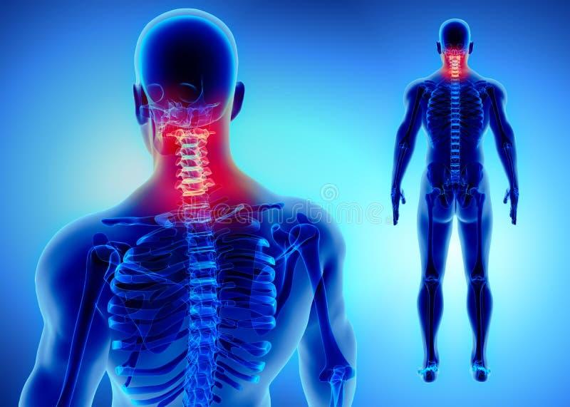 3D子宫颈脊椎的例证,医疗概念 库存例证