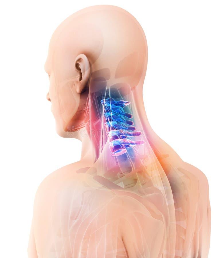 3D子宫颈脊椎的例证,医疗概念 皇族释放例证