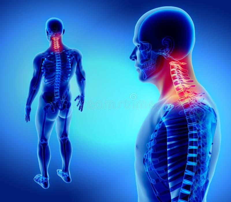 3D子宫颈脊椎的例证,医疗概念 向量例证