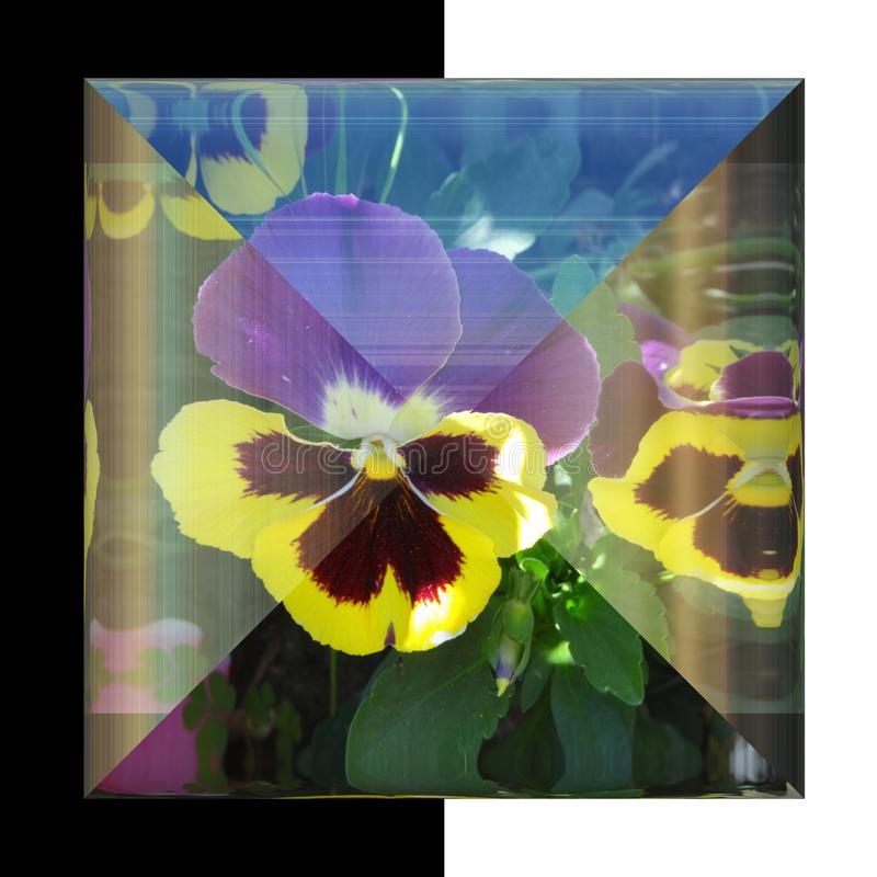 3D有真正的花的光滑的方形的按钮 库存照片