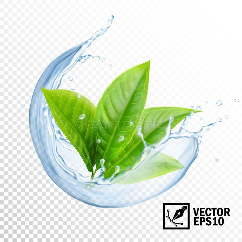 3D水现实透明传染媒介飞溅与茶或薄菏叶子的  编辑可能的手工制造滤网 向量例证