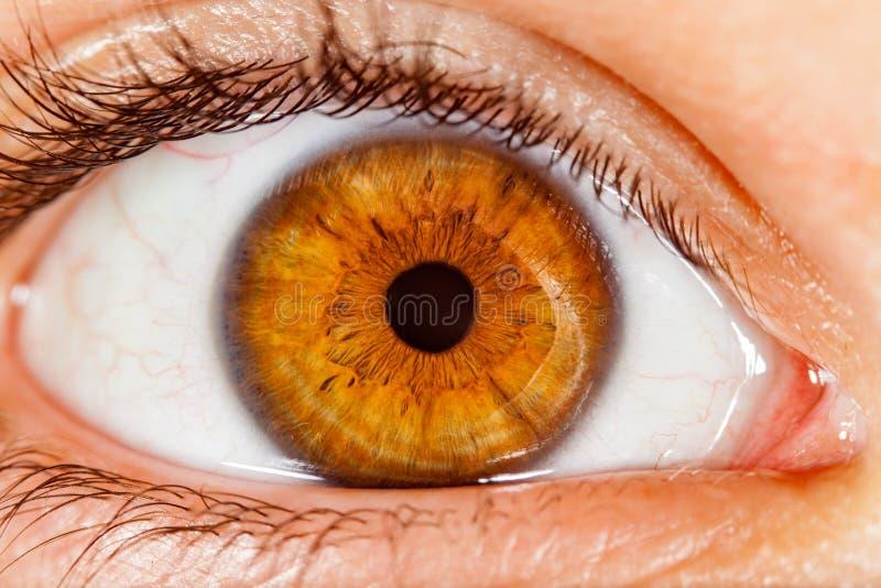 20d照相机eos眼睛人力宏观射击 免版税库存图片