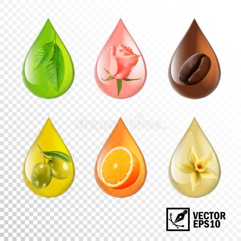 3d现实传染媒介透明下落上油与口味和芳香:茶,上升了,咖啡,橄榄,桔子,香草 编辑可能的手工制造滤网 皇族释放例证