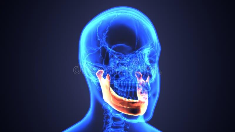 3d男性颧骨头骨解剖学-蓝色概念的例证 皇族释放例证