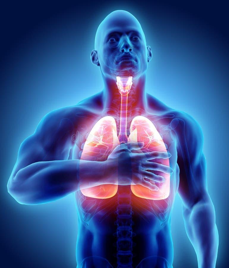 3d痛苦的肺和的胸口,医疗医疗保健的例证 库存例证