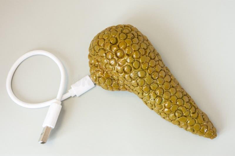 3D胰腺形状有连接的通过充电绳子,缆绳或为连接用其他设备 利用仿生学技术的概念或 免版税图库摄影