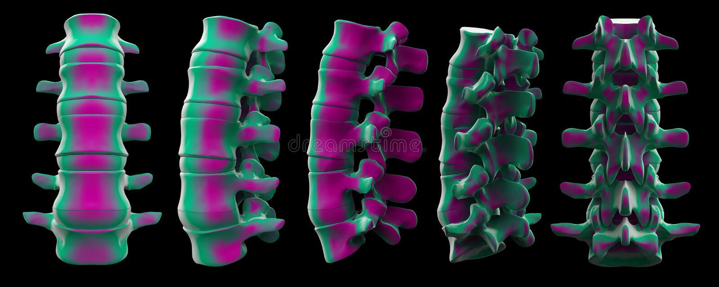 3d脊椎结构翻译  库存例证
