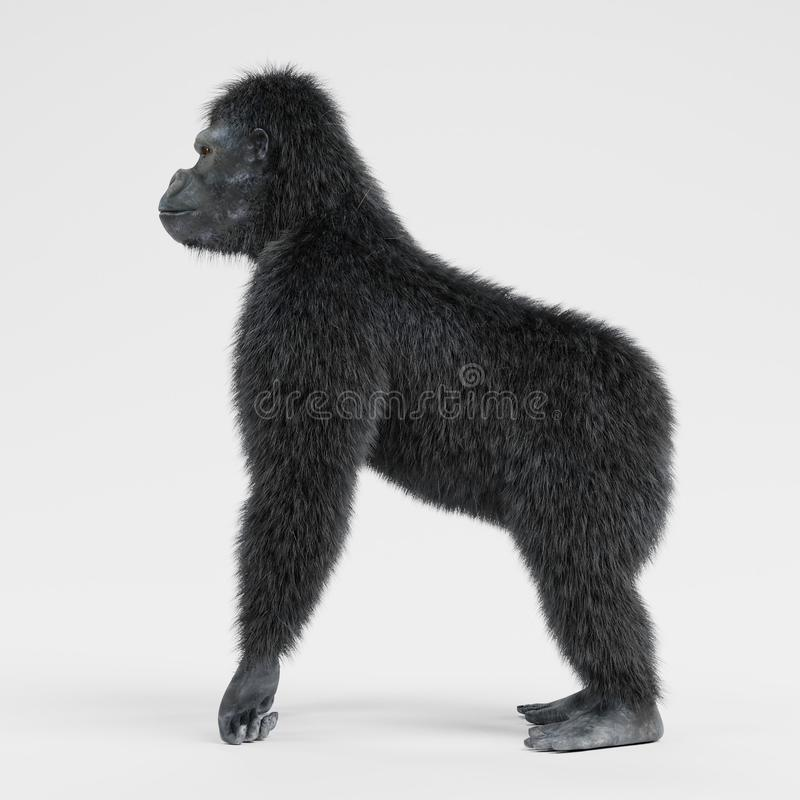 3d übertragen vom Gorilla lizenzfreie abbildung