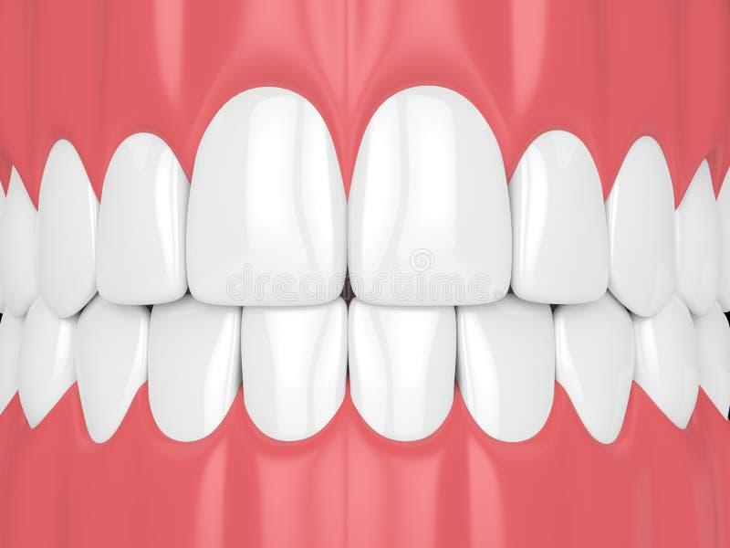 3d übertragen vom Kiefer mit den Zähnen vektor abbildung