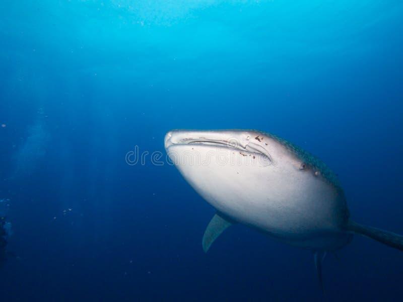 3d ścinek nad ścieżką odpłaca się cienia rekinu wielorybi biel zdjęcie royalty free