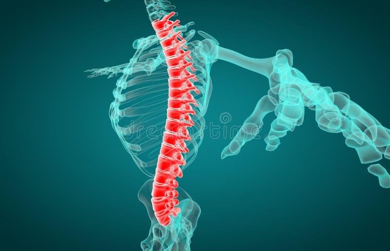 3D иллюстрация позвоночника, медицинская концепция бесплатная иллюстрация