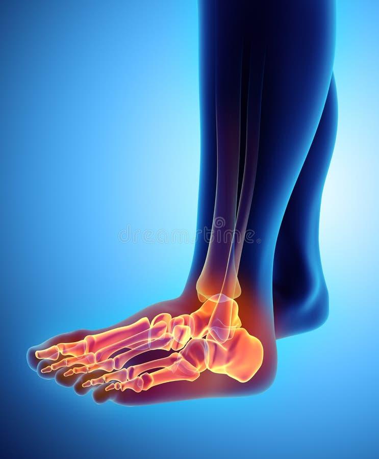 3D иллюстрация скелета ноги, медицинская концепция бесплатная иллюстрация