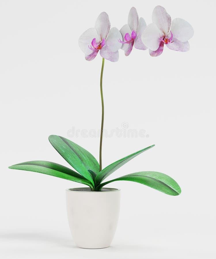 3D представляют цветка орхидеи иллюстрация вектора