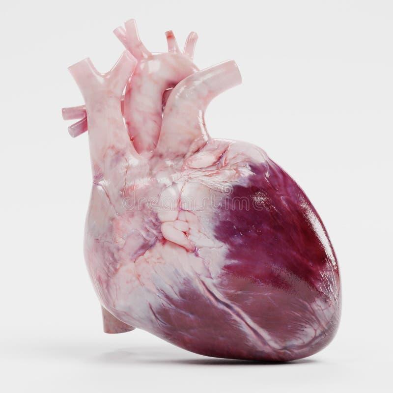 3d представляют человеческого сердца иллюстрация вектора
