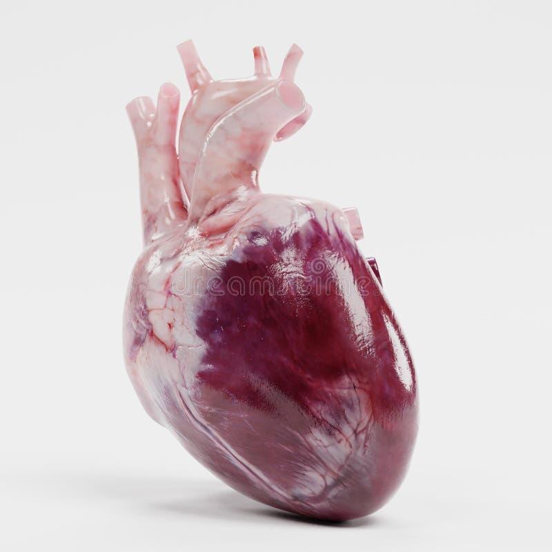 3d представляют человеческого сердца иллюстрация штока