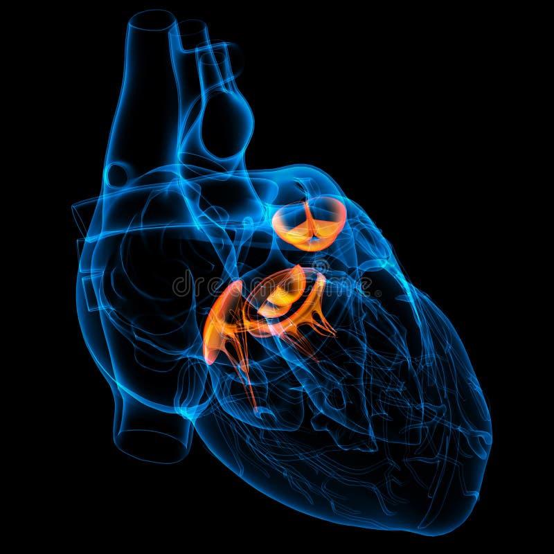 3d представляют сердечный клапан иллюстрация штока