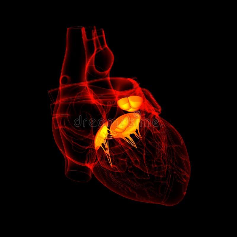 3d представляют сердечный клапан бесплатная иллюстрация