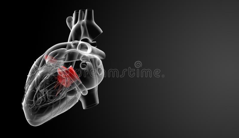 3d представляют сердечный клапан иллюстрация вектора