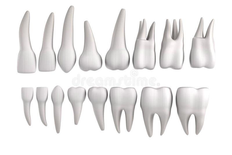 3d представляют человеческих зубов иллюстрация штока
