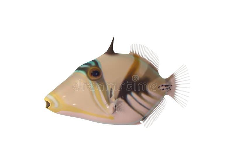 3D翻译在白色的礁石引金鱼 向量例证