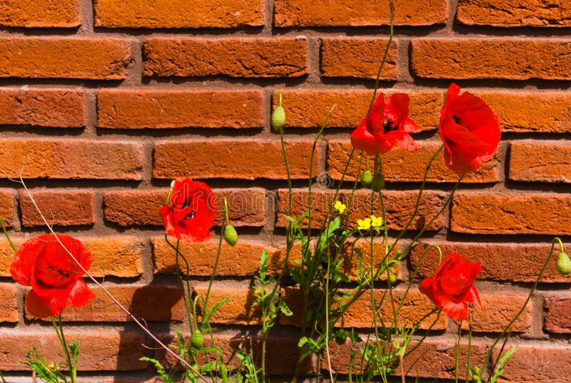 D'abord floraison des fleurs au printemps photographie stock libre de droits