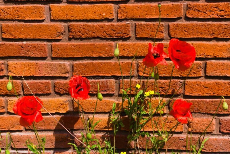 D'abord floraison des fleurs au printemps images stock
