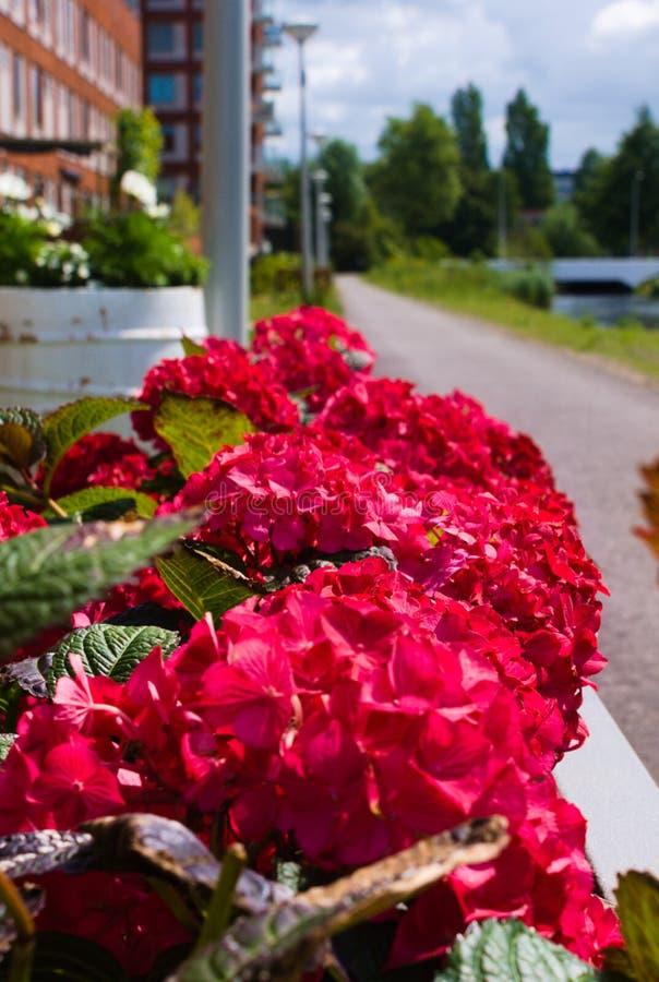 D'abord floraison des fleurs pendant l'été photographie stock