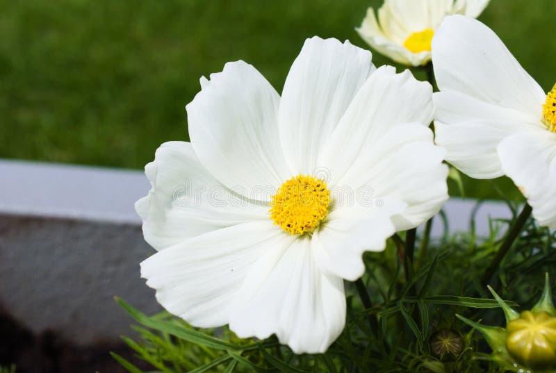 D'abord floraison des fleurs pendant l'?t? photos stock